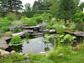 Water a treasure to be captured ecological landscape for Planting around a pond suggestions
