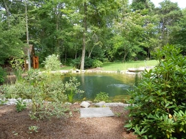 Beautiful and beneficial natural swimming ponds offer for Beneficial pond plants