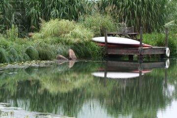Make a splash with native wetland perennials ecological for Natural pond plants