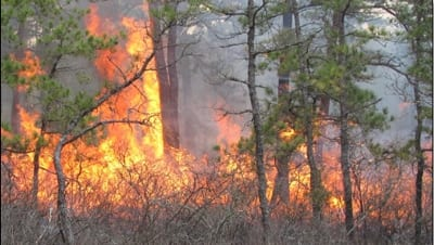 A Synopsis Of Prescribed Fire In New England Ecological